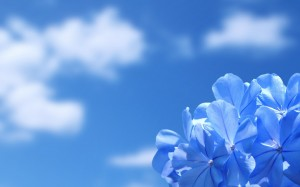 blue-flowers-and-blue-sky-wallpaper